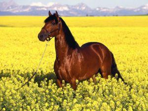 cavallo-tra-fiori1